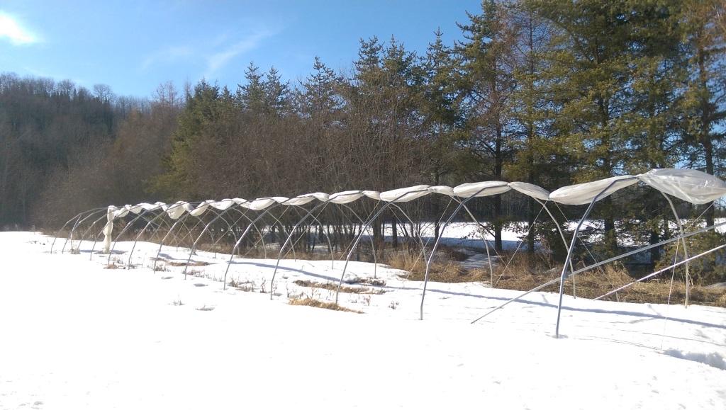 Nordvie hivernation tunnel chenille